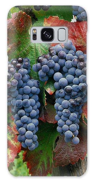5b6374-cabernet Sauvignon Grapes At Harvest Galaxy Case