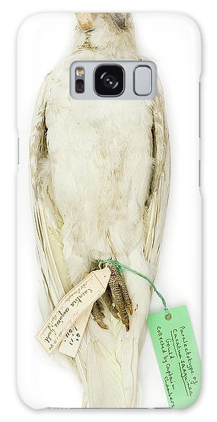 Cockatoo Galaxy S8 Case - Cacatua Sanguinea by Natural History Museum, London