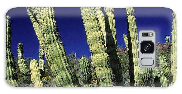 Cacti Galaxy Case - Cacti, Az Usa by Peter Essick