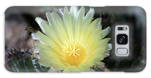 Cacti Flower In White Galaxy Case