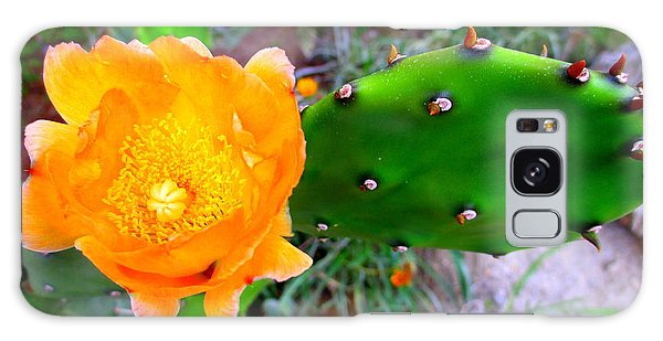 Cactus Flower Galaxy Case by Randall Weidner