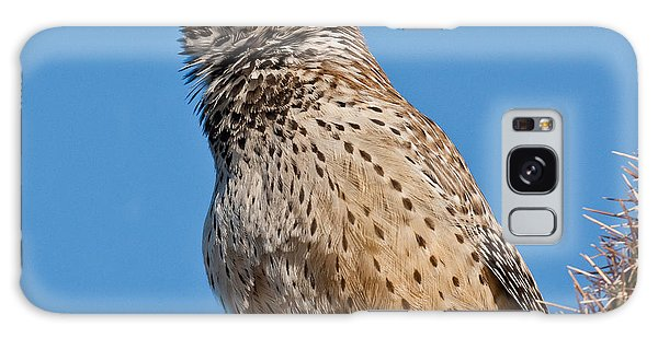 Cactus Wren Singing Galaxy Case