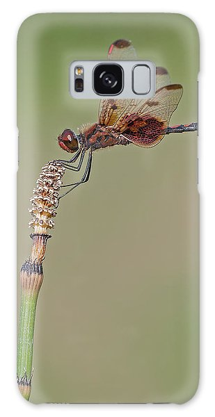 Calico Pennant On Horsetail Galaxy Case