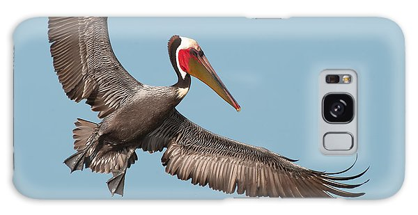 California Brown Pelican With Stretched Wings Galaxy Case by Ram Vasudev