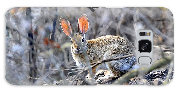 Homeless Hare Galaxy Case