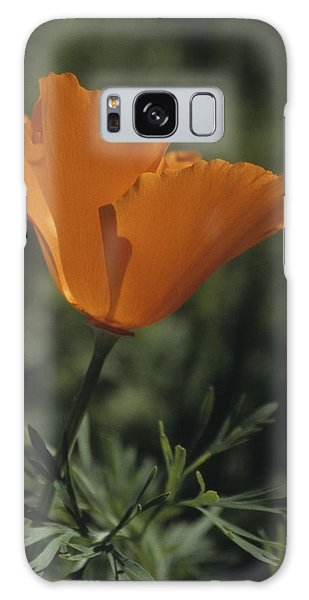 California Poppy Close Up Galaxy Case
