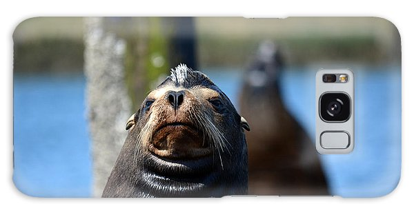 California Sea Lion Galaxy Case by Gayle Swigart