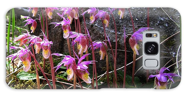 Calypso Orchids Galaxy Case by Shirley Sirois