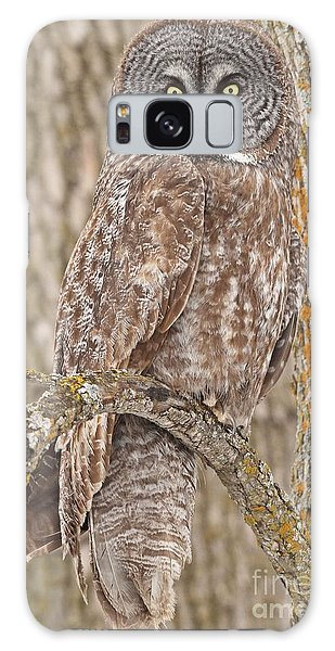 Camouflage-an Owl's Best Friend Galaxy Case