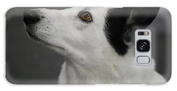 Canaan Dog Galaxy Case