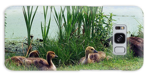 Gosling Galaxy Case - Canada Geese Branta Canadensis by Animal Images