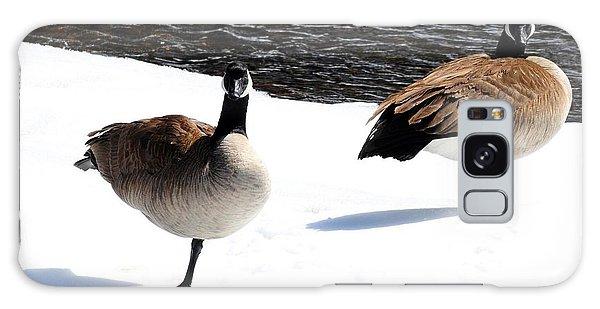 Canada Geese - Cold Feet Galaxy Case by Marilyn Burton