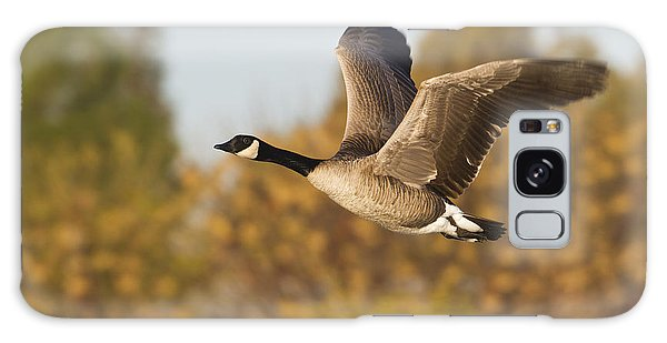 Canada Goose In The Skies  Galaxy Case