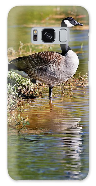 Canada Goose Galaxy Case - Canada Goose Lakeside Reflection by Darrell Gulin