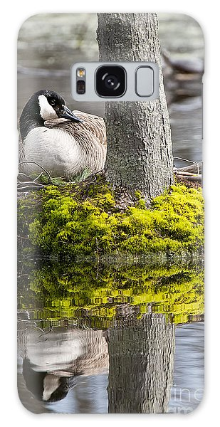 Canada Goose On Nest Galaxy Case
