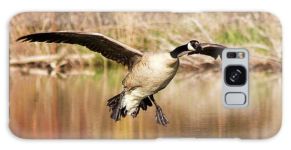 Canada Goose Galaxy Case - Canada Goose Prepares To Land In Small by Chuck Haney