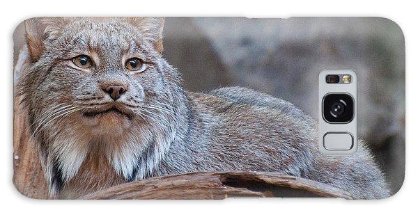 Canada Lynx Galaxy Case by Bianca Nadeau