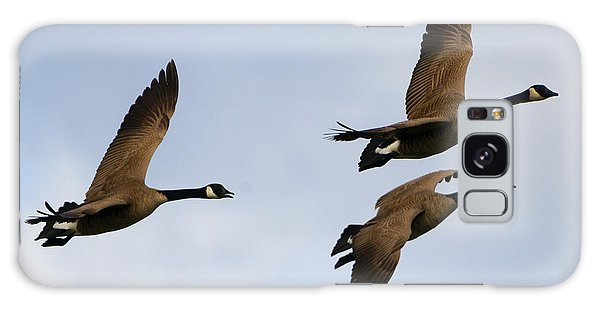 Canada Goose Galaxy Case - Canadian Geese Trio by Mike Dawson
