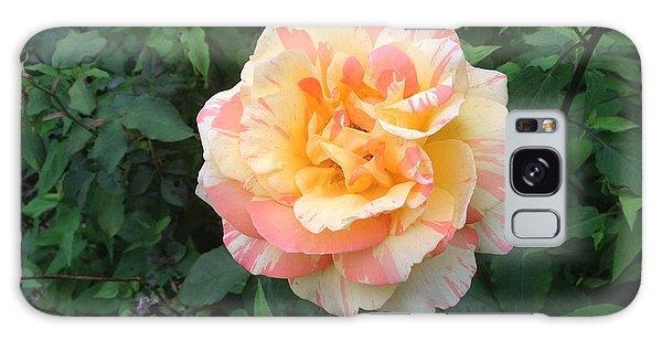 Candy Cane Rose Galaxy Case
