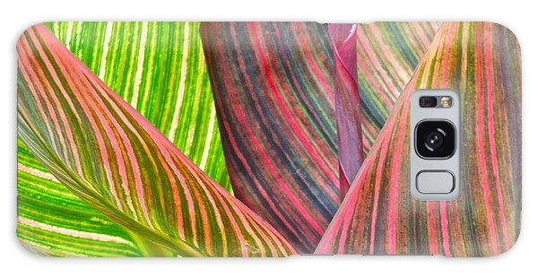 Canna Tropicana Color Galaxy Case by Eve Spring