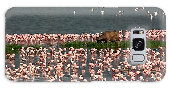 Cape Buffalo And Lesser Flamingos Galaxy Case by Panoramic Images