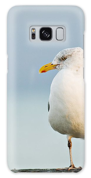 Cape Cod Seagull Galaxy Case