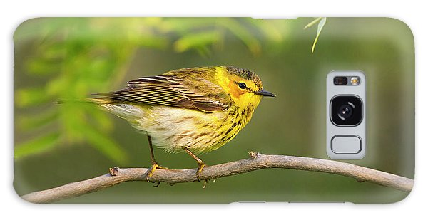 Hunting Island Galaxy Case - Cape May Warbler (dendroica Tigrina by Larry Ditto