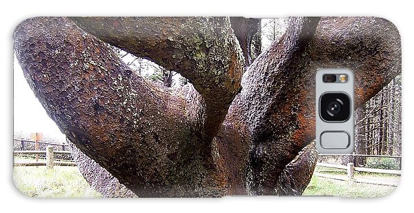 Cape Meares Octopus Tree Galaxy Case by Peter Mooyman