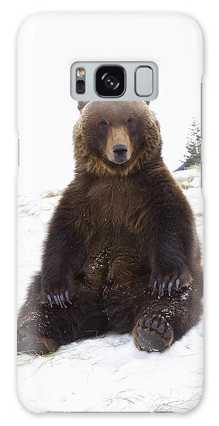 Captive Grizzly During Winter Sits Galaxy Case by Doug Lindstrand