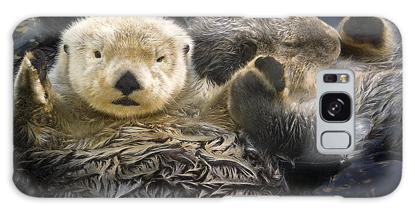 Otter Galaxy S8 Case - Captive Two Sea Otters Holding Paws At by Tom Soucek
