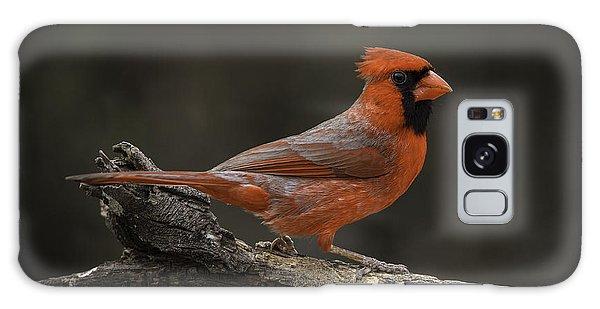 Cardinal 2011-1 Galaxy Case