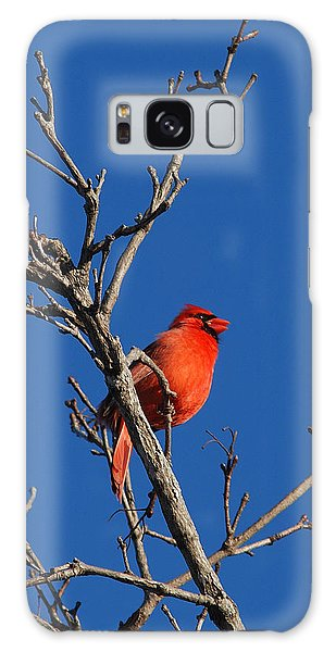 Cardinal And Blue Galaxy Case
