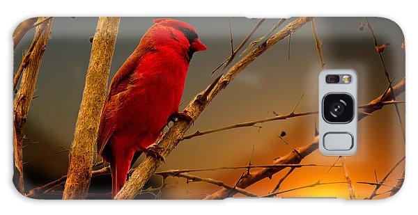 Cardinal At Sunset Valentine Galaxy Case