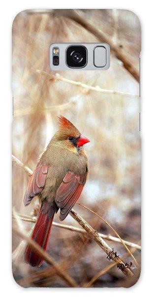 Cardinal Birds Female Galaxy Case