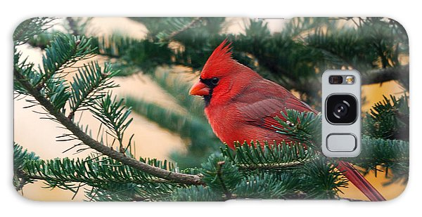 Cardinal In Balsam Galaxy Case