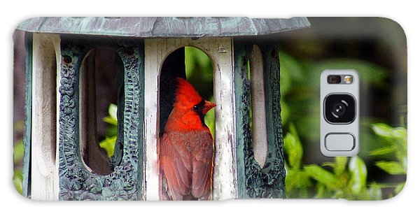 Cardinal In Bird Feeder Galaxy Case by Debra Crank