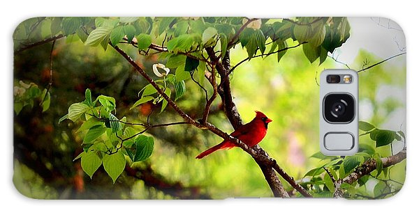 Cardinal In Dogwood Galaxy Case by Tara Potts