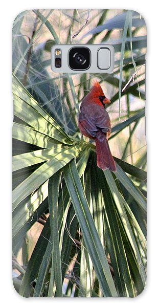 Cardinal In Palmetto Tree Galaxy Case