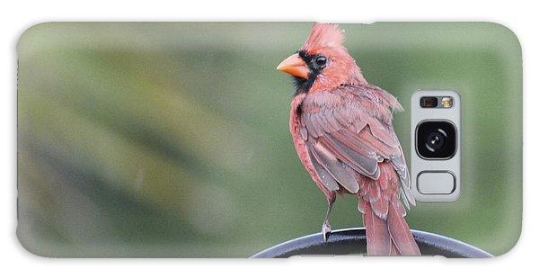 Cardinal In The Rain Galaxy Case by Jeanne Kay Juhos