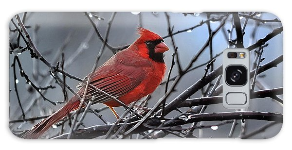 Cardinal In The Rain   Galaxy Case by Nava Thompson