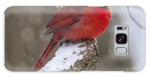 Cardinal In The Snow Galaxy Case