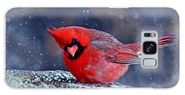 Cardinal In The Snow Galaxy Case by Rodney Campbell