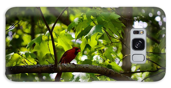 Cardinal In The Trees Galaxy Case by Tara Potts
