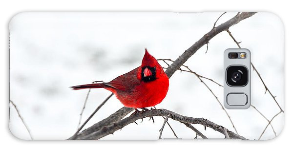Cardinal On A Branch  Galaxy Case