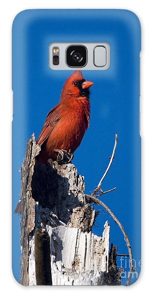 Cardinal On Honeymoon Island Galaxy Case