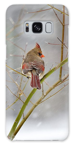 Cardinal On Maple Tree Galaxy Case