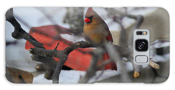 Cardinal Out On A Limb Galaxy Case