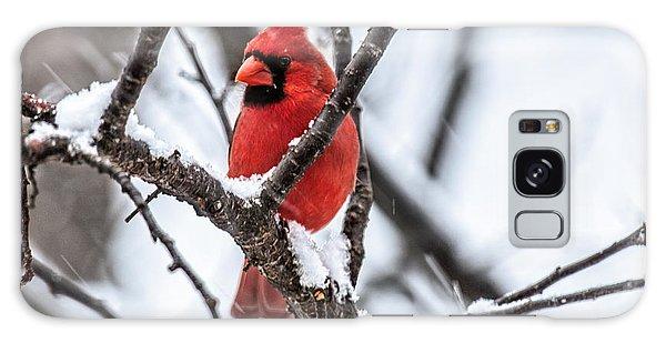 Cardinal Snow Scene Galaxy Case