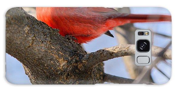 Cardinal Up Close Galaxy Case