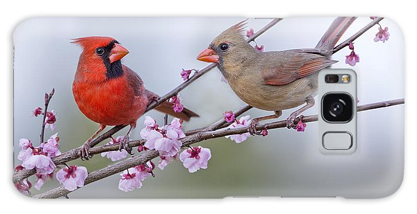Cardinals In Plum Blossoms Galaxy Case